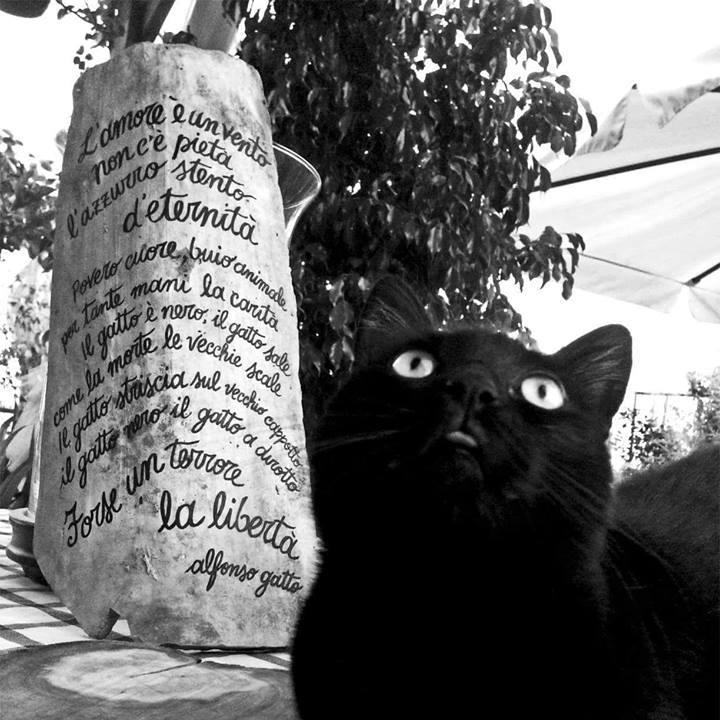 sasso-istoriato-gatto